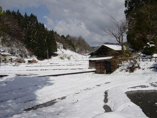田んぼ一面雪だらけ。
